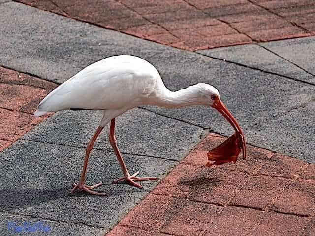 Turkey Leg Skin