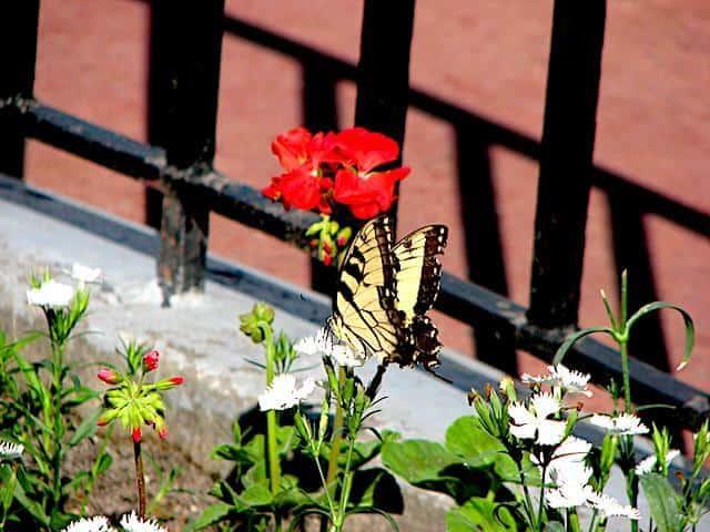 Outpost Butterfly Garden